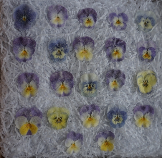 blue purples violas 20